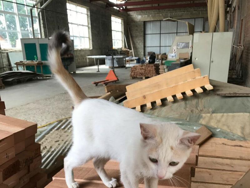 Фото фабрики «Woodchoice»